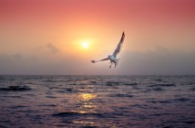 Jonathan Livingston Le Goéland- jechangemylife