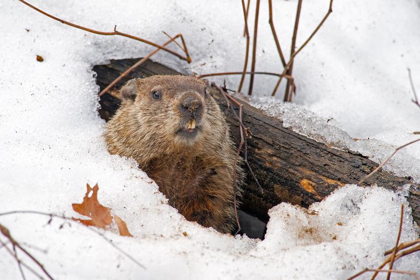 Déprime hivernale, comment y échapper avec un moyen 100% naturel et gratuit. Jechangemylife.com